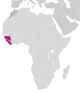 liberia, guinea, sierra leone